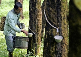 Thai Rubber City: To attract investment